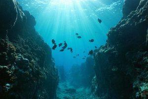 Un-tratado-para-proteger-los-oceanos