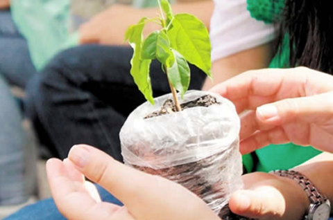 Siembran-30.000-plantines-para-reforestar-Sucre