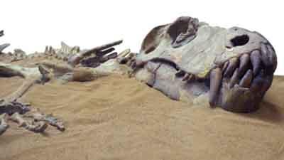 8 animales extintos que nunca más volveremos a ver