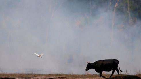 Incendios en la Amazonia aceleran el derretimiento de los glaciares de los Andes