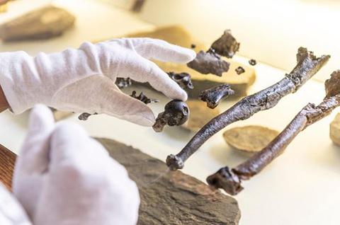 Un fósil simio arroja luz sobre cómo era esta especie antes de ser bípeda