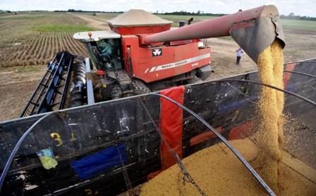 Se-reduce-la-produccion-de-granos-esta-gestion-