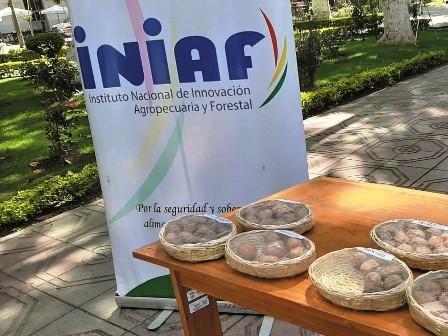 Certifican-semillas-en-Tarija