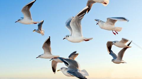 El cambio climático redujo el tamaño de las aves