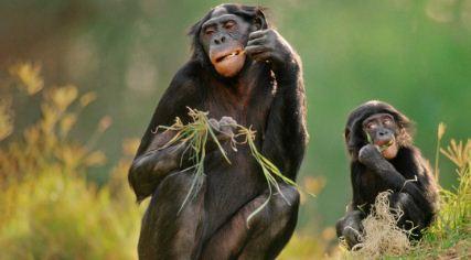 El alcohol salvó a nuestros ancestros de la extinción