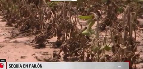 Pequenos-productores-pierden-mas-170.000-has-de-cultivos-en-Santa-Cruz