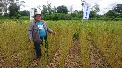 Variedad-comercial-de-la-quinua-tropicalizada-en-Bolivia-se-lanzara-al-mercado-en-2020