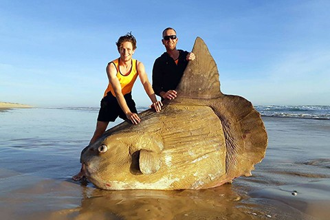 Hallan-un-pez-luna-muerto-en-una-playa-de-Australia