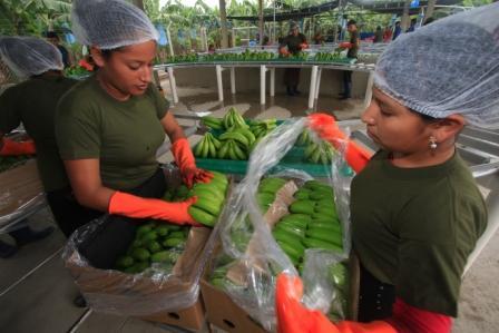 Importacion-de-frutas-impulsa-proyectos-para-mejorar-la-produccion-nacional