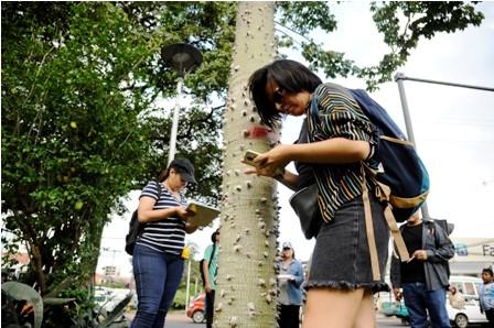Proyecto-BRT-puede-danar-raices-de-arboles