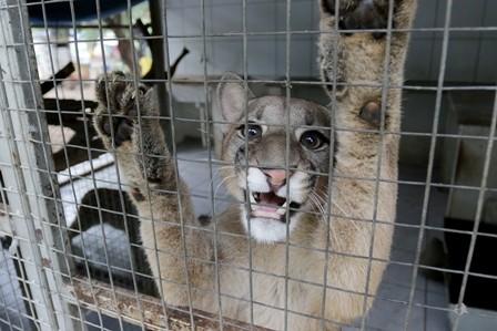 40%-de-animales-son-entregados-voluntariamente