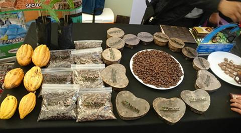 Bolivia-ya-tiene-a-los-seis-mejores-cacaos-que-representaran-al-pais-en-torneo-de-Paris