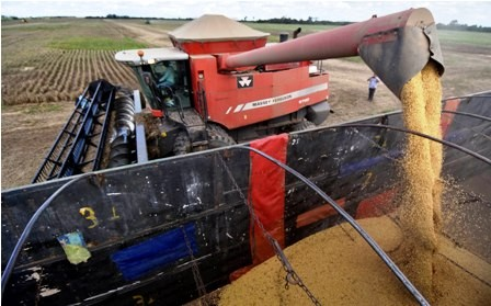 Sector-soyero-pide-liberar-exportaciones