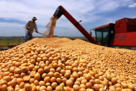 Productores advierten con excluir la soya