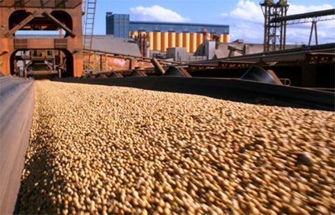 Dan-72-horas-al-Gobierno-para-liberar-la-exportacion-de-soya-
