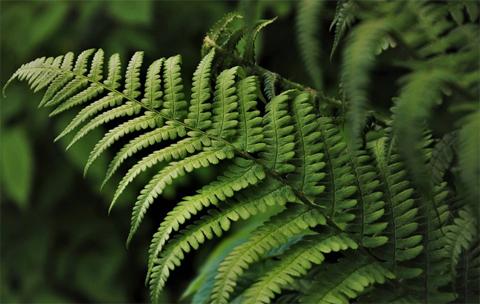 Alerta:-Las-plantas-se-extinguen-500-veces-mas-rapido-de-lo-normal