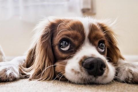 Descubren-por-que-nadie-puede-resistirse-a-la-mirada-triste-de-un-perro
