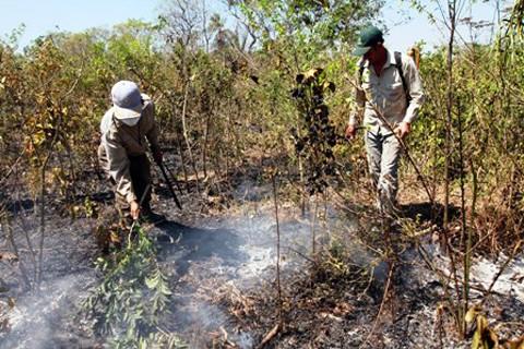 Sancionaran-con-carcel-el-chaqueo-ilegal-en-Chuquisaca