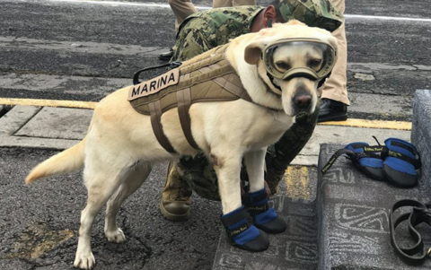 Frida, la perrita rescatista se retira; le hacen homenaje