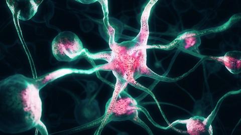 Cultivan-un--minicerebro--con-actividad-neuronal-coordinada