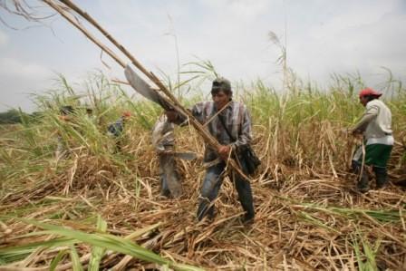 Erradicado-trabajo-infantil-en-la-zafra