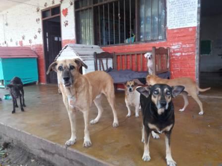Refugios-de-animales-se-establecen-como-esperanza-de-vida