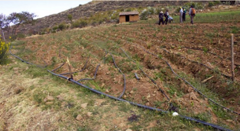 Dia-de-la-Revolucion-Agraria-en-Bolivia-promueve-la-unidad