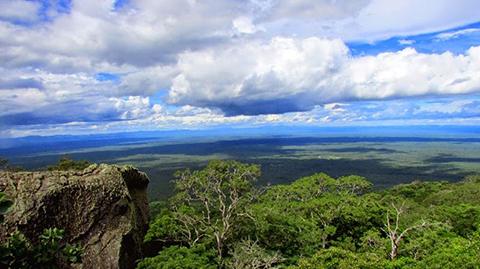 La-recuperacion-de-los-bosques-bolivianos-puede-tardar-mas-de-un-siglo