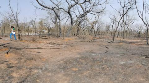 Pese a incendios, IBCE defiende la ampliación de la frontera agrícola