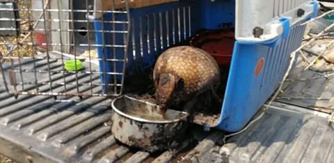 Animales-afectados-por-los-incendios-son-liberados-de-albergues