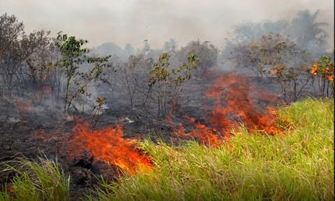 Se-quemaron-mas-de-600-mil-hectareas-por-incendios,-segun-el-Cipca