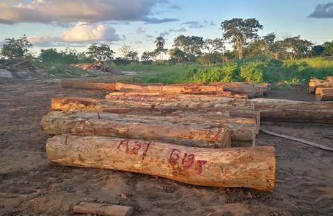 Decomisan-madera-valuada-en-mas-de-Bs-202-mil