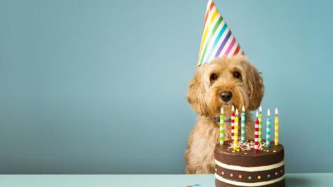 Adiós a la regla de los 7 años: así se calcula la 'edad humana' de un perro
