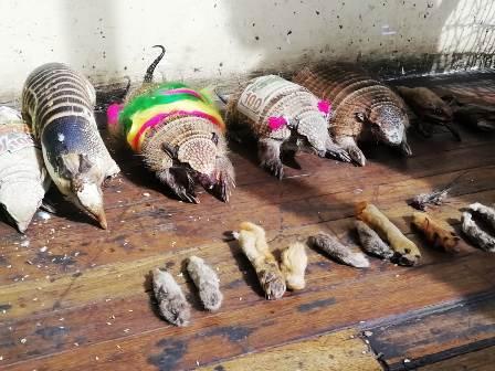 Operacion-rescate-de-animales-en-La-Paz