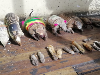 Decomisan animales exóticos y en peligro de extinción