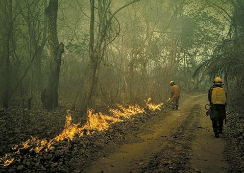 Lluvias aplacan incendios se mantienen 22 quemas activas
