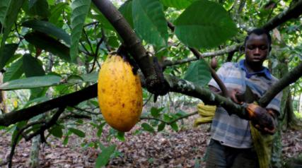 Gran-parte-del-suministro-mundial-de-chocolate-depende-del-trabajo-de-mas-de-un-millon-de-ninos