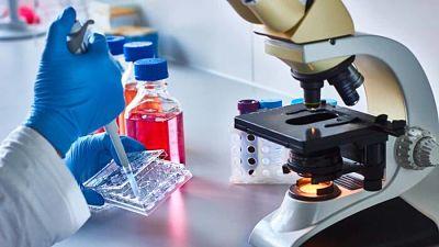 Científicos identifican unas células madre que regeneran los músculos hasta la vejez