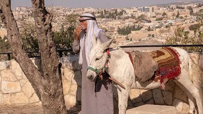 Descubren-en-burros-un-parasito-que-puede-afectar-a-los-seres-humanos-
