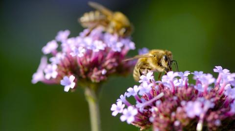Estudio alerta sobre catastrófica extinción de insectos