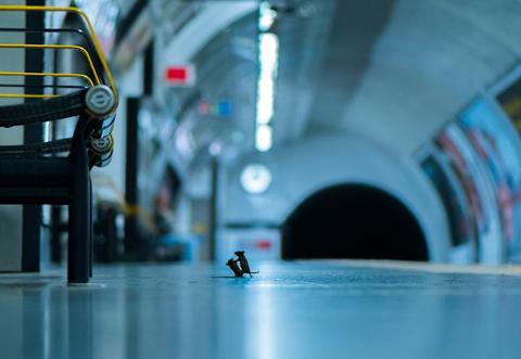 Pelea de ratones gana premio de fotografía de vida salvaje
