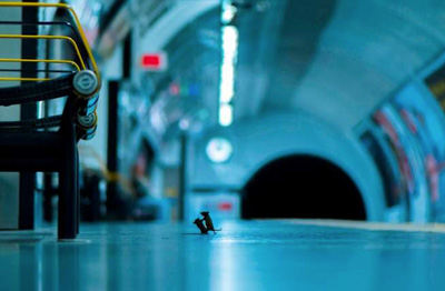-Una-pelea-de-ratones-en-el-metro-de-Londres-,-mejor-foto-de-naturaleza-del-ano