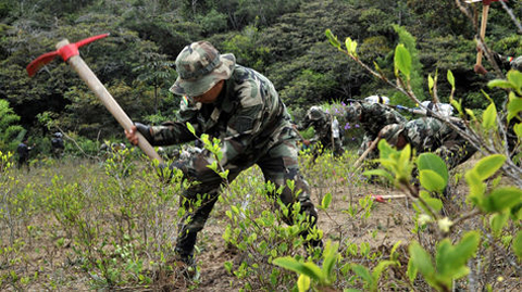 Gobierno-se-fija-como-meta-erradicar-8.525-hectareas-de-coca