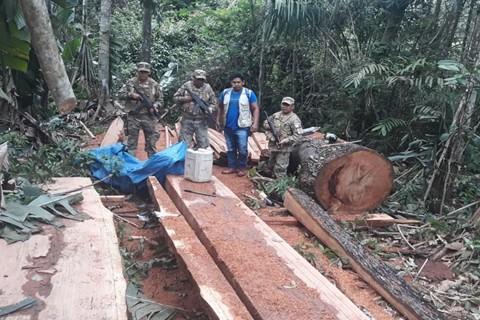 Decomisan-300-pies-de-madera-en-Guayaramerin