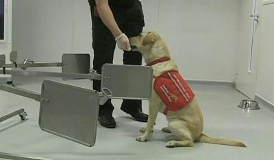 Cientificos-finlandeses-entrenan-a-perros-para-detectar-el-covid-19