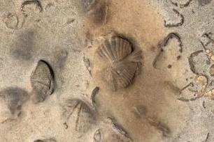 Hallan-restos-fosiles-de-animales-marinos-en-el-TIPNIS