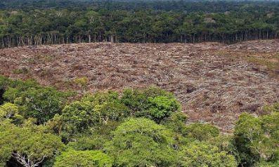 Gobierno-de-Brasil-destituye-a-la-coordinadora-del-instituto-que-supervisa-la-deforestacion-en-la-Amazonia