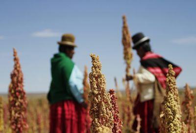 Resaltan la alianza de productores de la quinua de Bolivia en congreso internacional