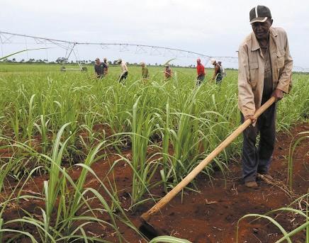 Se-preve-USD-472,5-millones--para-reactivar-el-agro