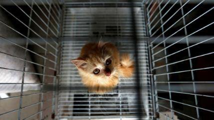 Un-gato--traficante-de-drogas--escapa-de-una-prision-de-maxima-seguridad-en-Sri-Lanka